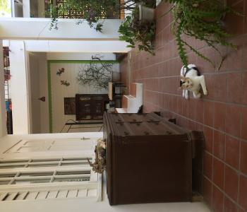 Cat outside Garden view room